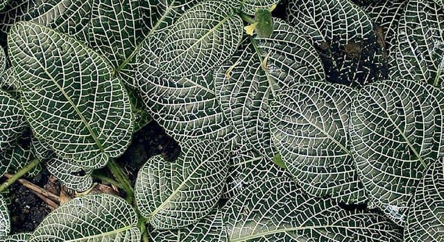 Природа Вопрос: Как называются растения, обитающие в местах с высокой влажностью воздуха и почвы?