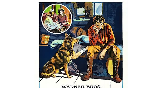 Кино Вопрос: Как звали собаку породы немецкая овчарка, спасшую студию «Warner Bros.» от банкротства в 1922 году?