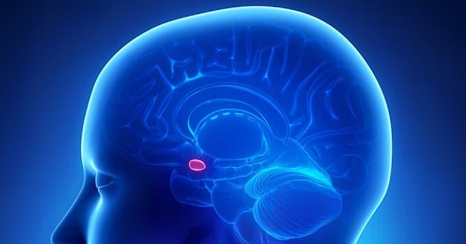 Наука Вопрос: Какая область мозга носит название амигдала?