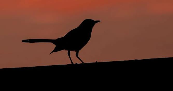 Природа Вопрос: Какая птица имеет способность подражать - имитировать любой звук на планете?