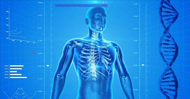 Наука Вопрос: Какие жидкости существуют в человеческом теле согласно гуморальной теории древнегреческого врача Гиппократа?