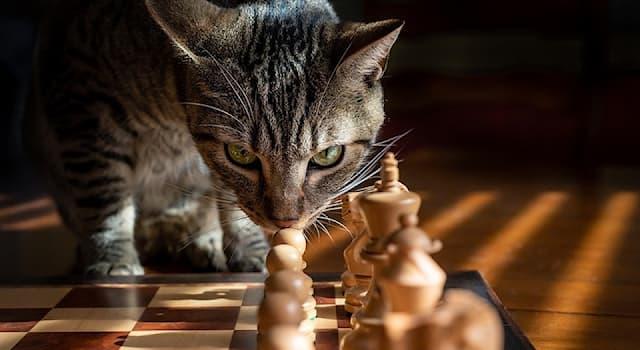 """Спорт Вопрос: Какие """"животные"""" есть в шахматах?"""