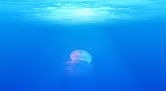 География Вопрос: Какое море считается самым чистым в мире?