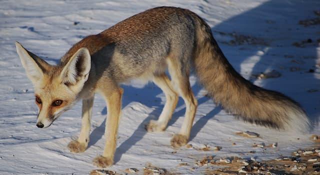 Природа Вопрос: Какое животное изображено на фото?