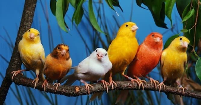 Культура Вопрос: Какой певчей птице посвящен музей в Курске?