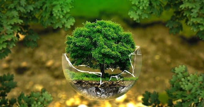 Наука Вопрос: Когда начала формироваться биосфера — оболочка Земли, заселённая живыми организмами?