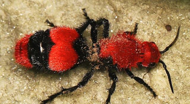 Природа Вопрос: Кого на самом деле «убили» осы, получившие прозвище «убийцы коров»?