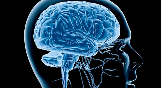 Science Trivia Question: What's the most important part of the brain?