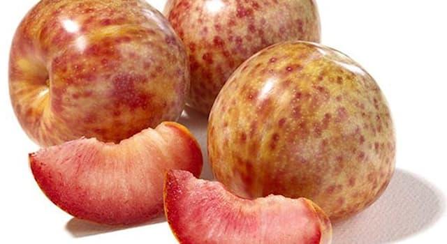 Природа Вопрос: Плюмкот - это гибрид абрикоса с каким растением?