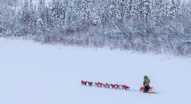 Спорт Вопрос: Разновидностью каких гонок являются Юкон Квест, ежегодно проводимые на территории Канады и США?