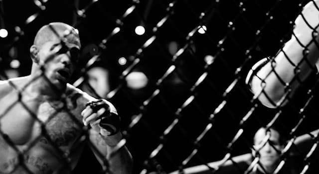 Спорт Вопрос: Соревнования в каком виде спорта проводит американская спортивная организация Bellator MMA?