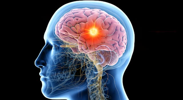 Science Trivia Question: What do the two small almond-shaped masses in the human brain called the amygdala control?