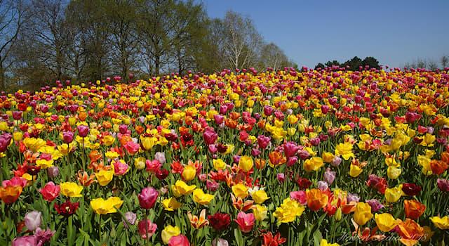 География Вопрос: В какой стране можно посетить королевский парк цветов Кёкенхоф?