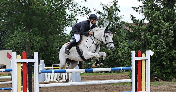 Спорт Вопрос: В каком году конный спорт был впервые включён в программу летних Олимпийских игр?