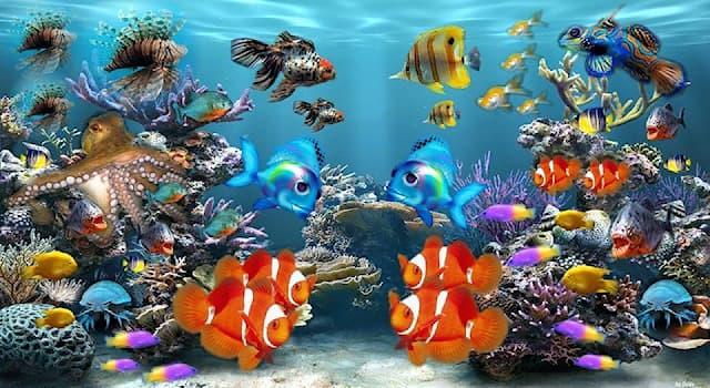 География Вопрос: В каком море находится Большой Барьерный риф?