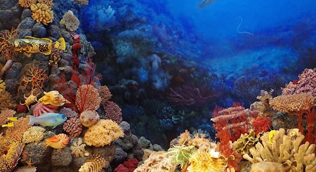 География Вопрос: В северной части какой страны недавно был обнаружен Амазонский коралловый риф?