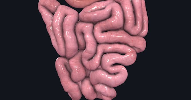 Science Trivia Question: What is the approximate length of human small intestine?