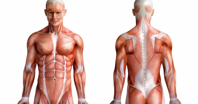 Science Trivia Question: What part of the body is affected by Orchitis?