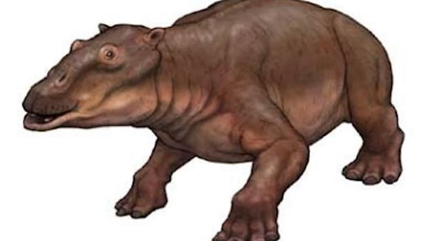 Nature Trivia Question: Which famous rock musician has a hippo-like fossil named after him?