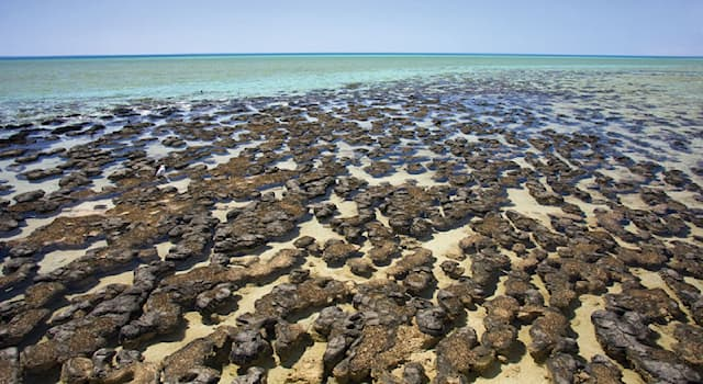 Geography Trivia Question: Which is one of the characteristics that makes Shark Bay, Australia, unique?