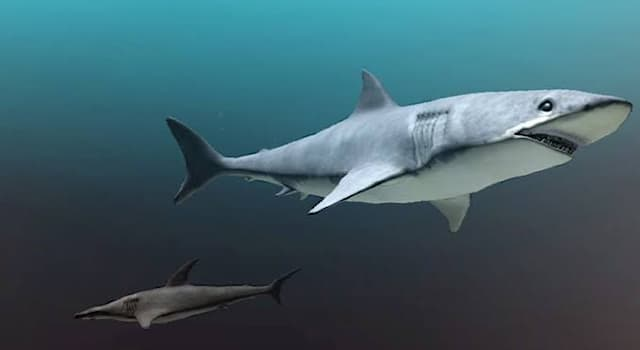 Nature Trivia Question: How many bones do sharks have in their bodies?