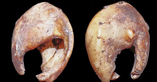 История Вопрос: Из чего сделаны самые древние бусы в мире, изготовленные более 142 тысяч лет назад?