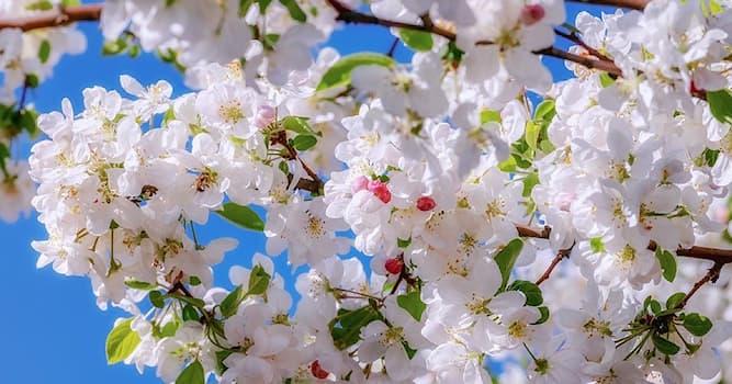 Природа Вопрос: К какому семейству растений относится яблоня?
