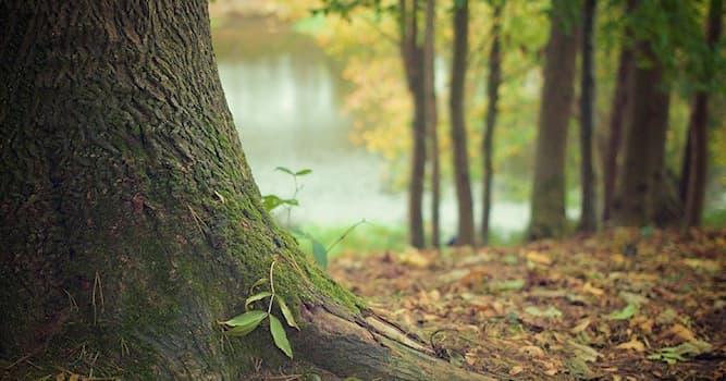Природа Вопрос: Каким термином описывают комплекс мероприятий, направленный на лечение деревьев?
