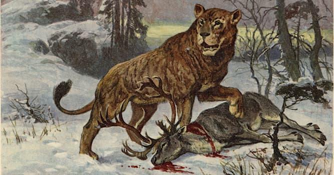 Природа Вопрос: Какое ныне существующее животное входит в род пантер?