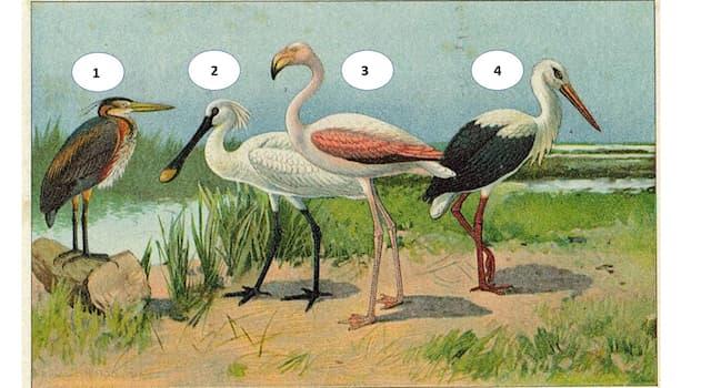 Природа Вопрос: Какое сопоставление птицы с номером на фотографии корректно?
