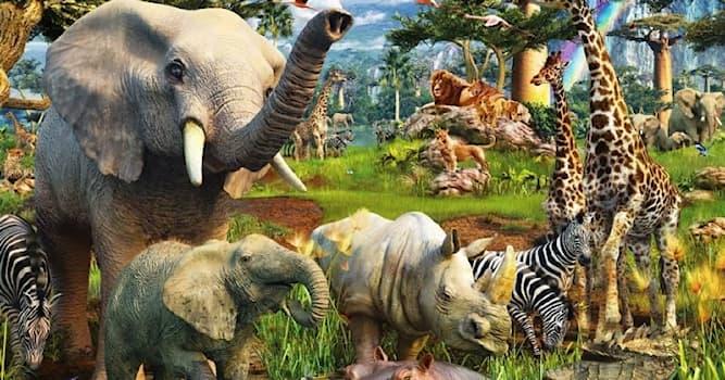 Природа Вопрос: Какое животное не умеет прыгать?