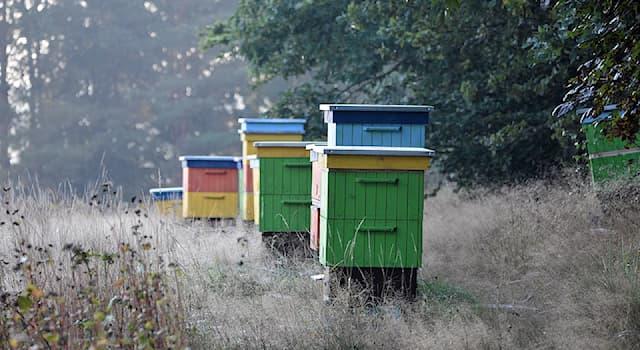 Природа Вопрос: Кого смогла отпугнуть с помощью пчелиных ульев зоолог Люси Кинг, защищая сельскохозяйственные посевы в Африке?