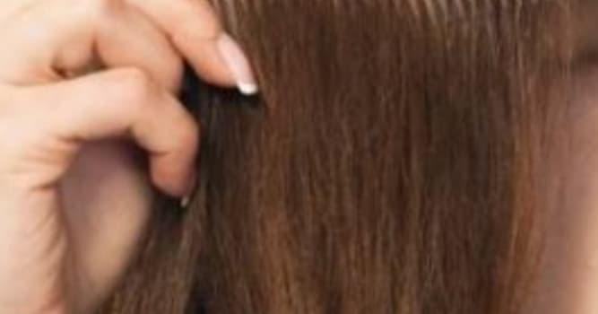 Наука Вопрос: Сколько видов волос имеется на теле человека?