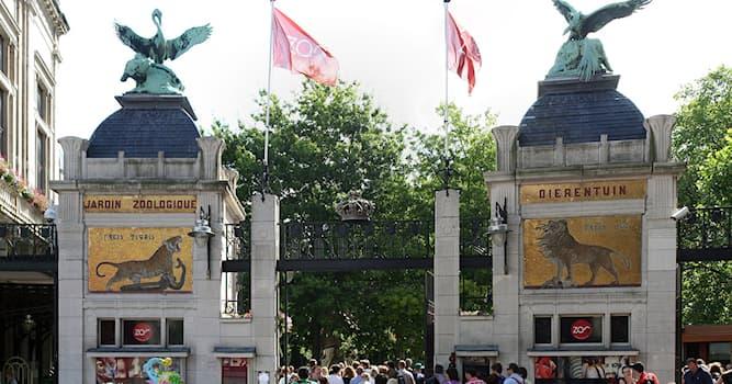 География Вопрос: В какой стране находится Антверпенский зоопарк, являющийся одним из старейших в Европе?
