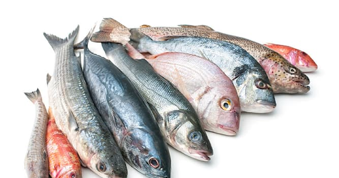 Nature Trivia Question: What is believed to be the most abundant genus of fish in the world?