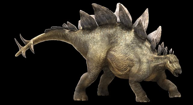 Nature Trivia Question: What is the informal term for the spikes on the end of a dinosaur's tail?