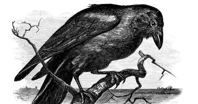 """Culture Trivia Question: What is the name of the author who wrote """"The Raven""""?"""