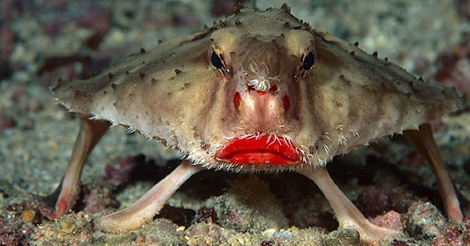 Nature Trivia Question: What is the name of the fish in the picture below?