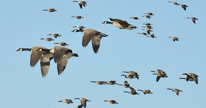 Nature Trivia Question: Where do almost all the northern birds go during winter?